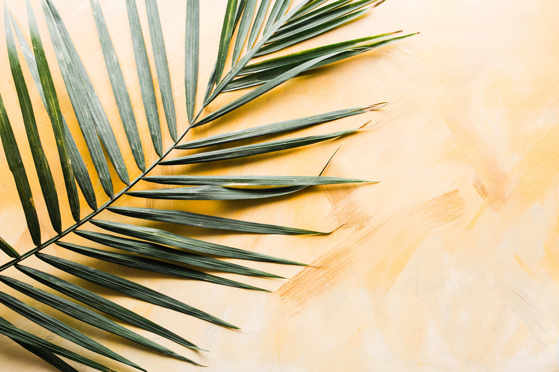 palm sunday st john port moody